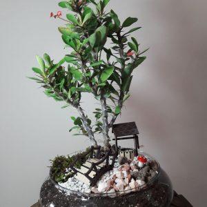 عکس گیاه مرجان