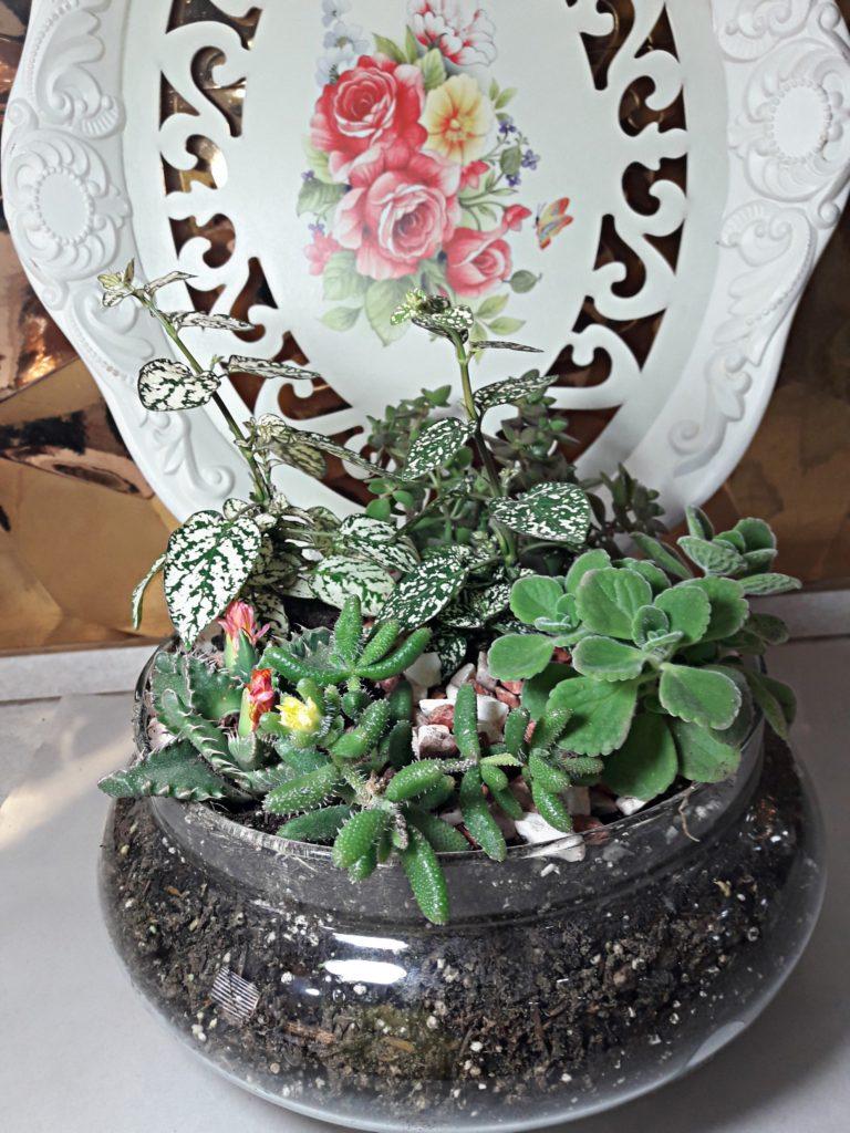 گلدان کاکتوریسا