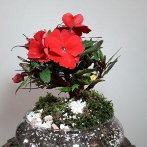 عکس گل بنفشه قرمز
